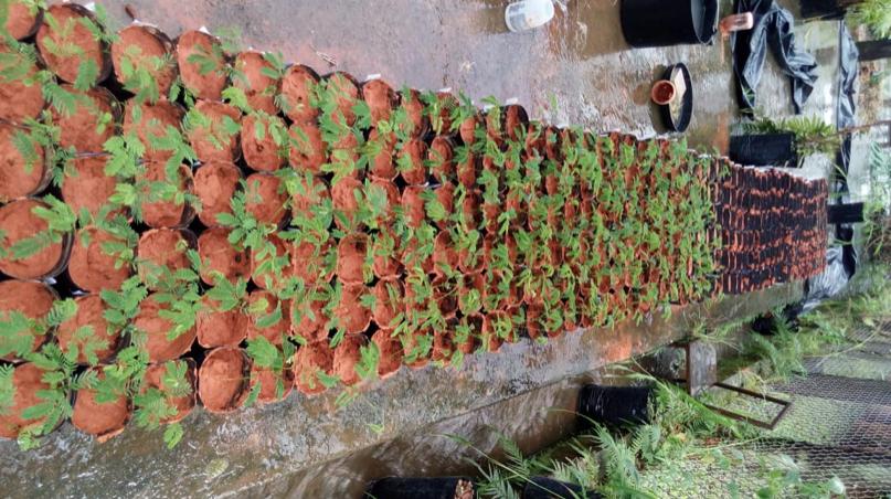 Cultivo de mudas no Jardim Botânico de Belo Horizonte